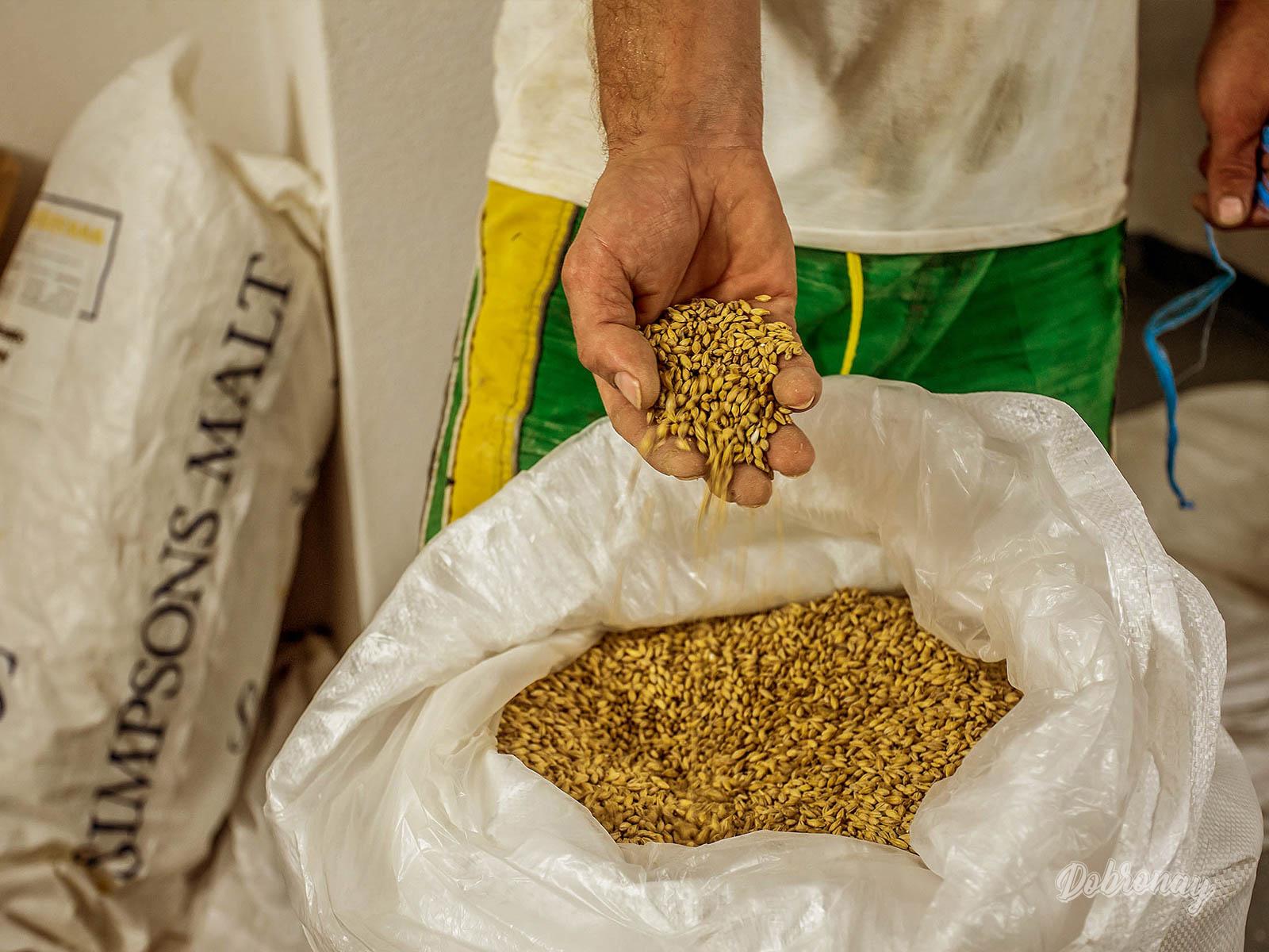 Sladovnícky jačmeň určený na produkciu nášho zlatého moku